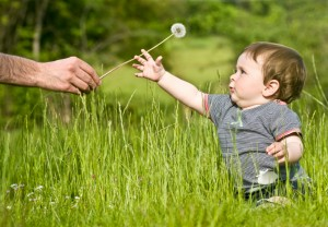 cute little child take dandelion from adult in summer outdoor